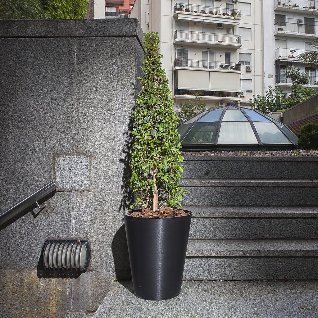 Plantas Faitful Combos Exterior Eugenia Piramidal Mauro Plastica - Plantas Faitful