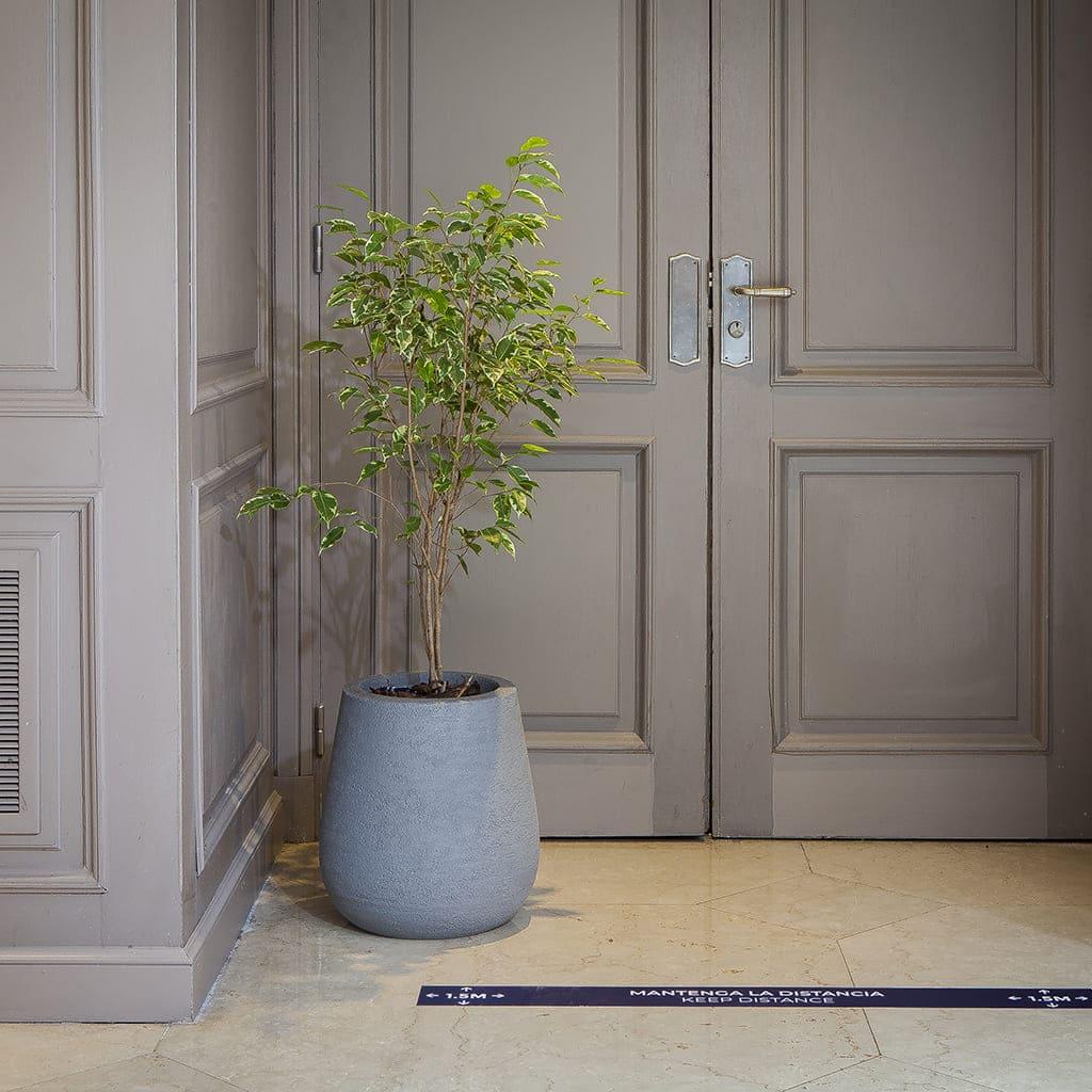 Plantas Faitful Combos Interior Ficus Variegado Mate Rustico Rotomoldeado - Plantas Faitful