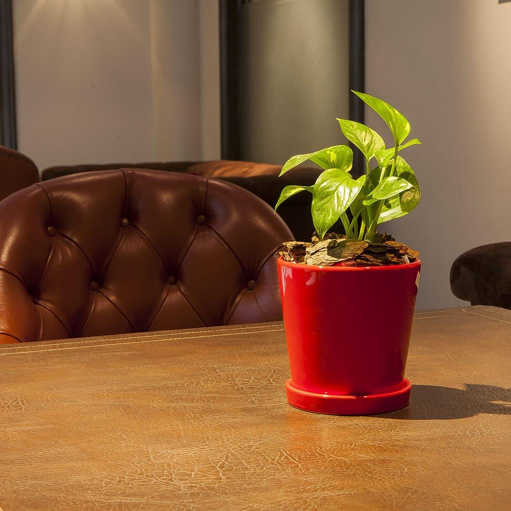 Plantas Faitful Combos Interior Potus Maceta Conica Ceramica Roja - Plantas Faitful