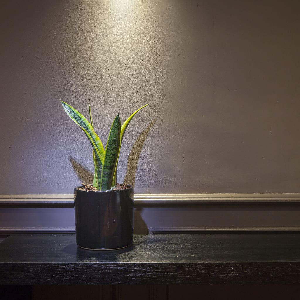 Plantas Faitful Combos Interior Sansevieria Variegada Cilindro Ceramica - Plantas Faitful