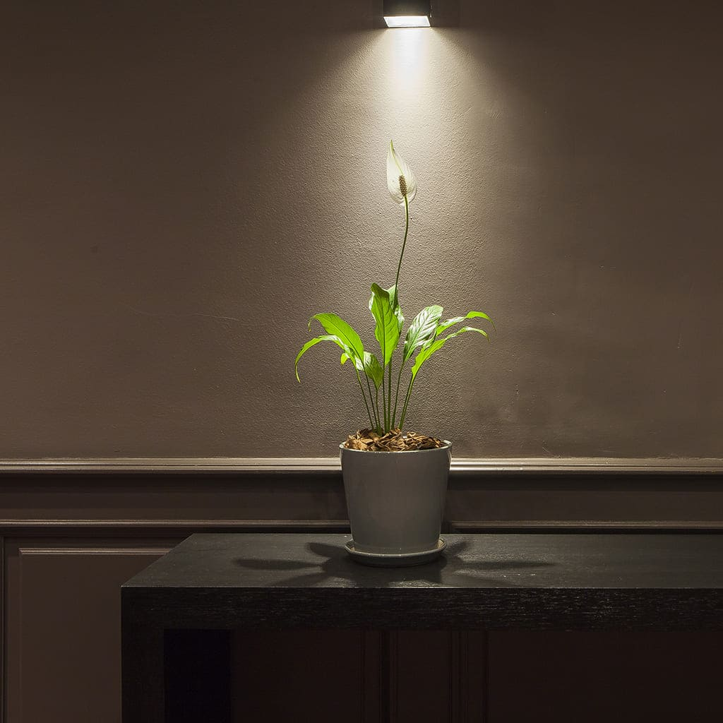 Plantas Faitful Combos Interior Spathiphyllum Conica Ceramica - Plantas Faitful