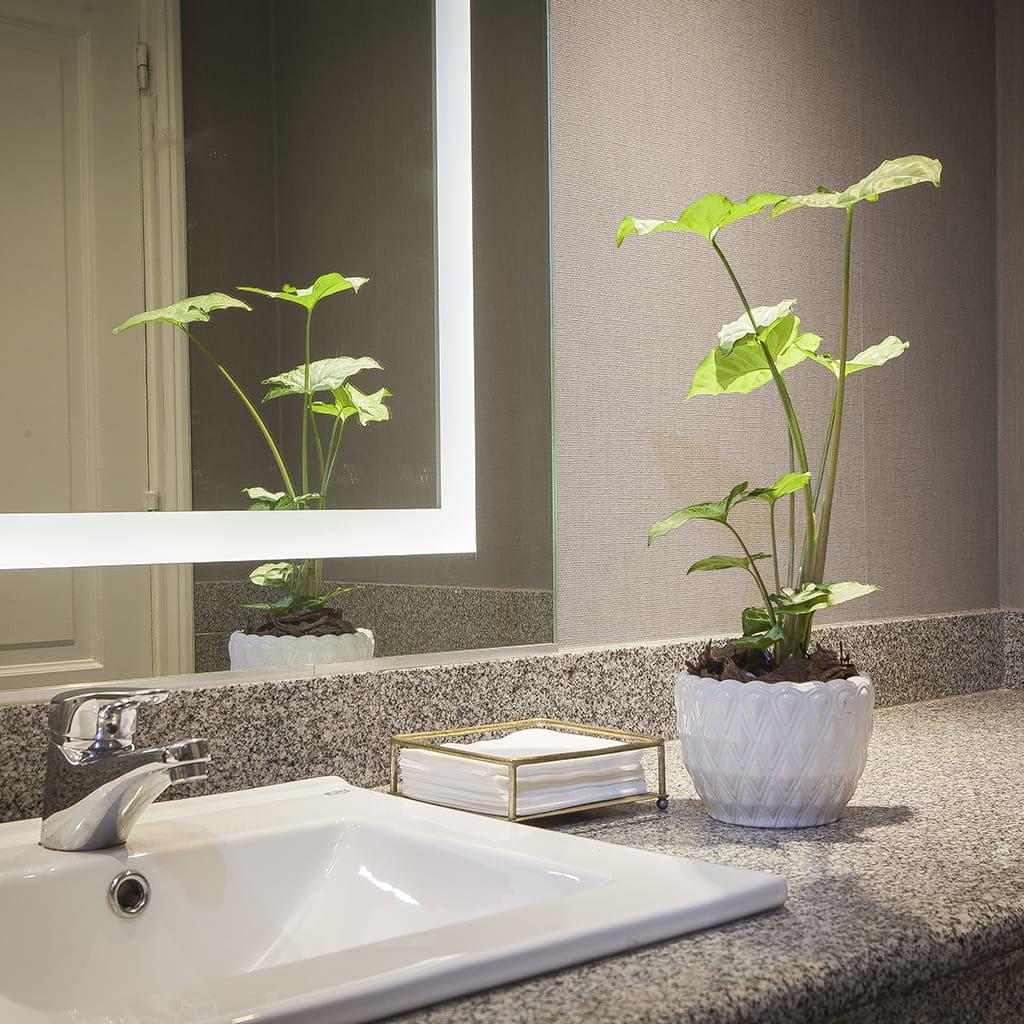 Plantas Faitful Combos Interior Syngonium Salvador Blanco Ceramica - Plantas Faitful
