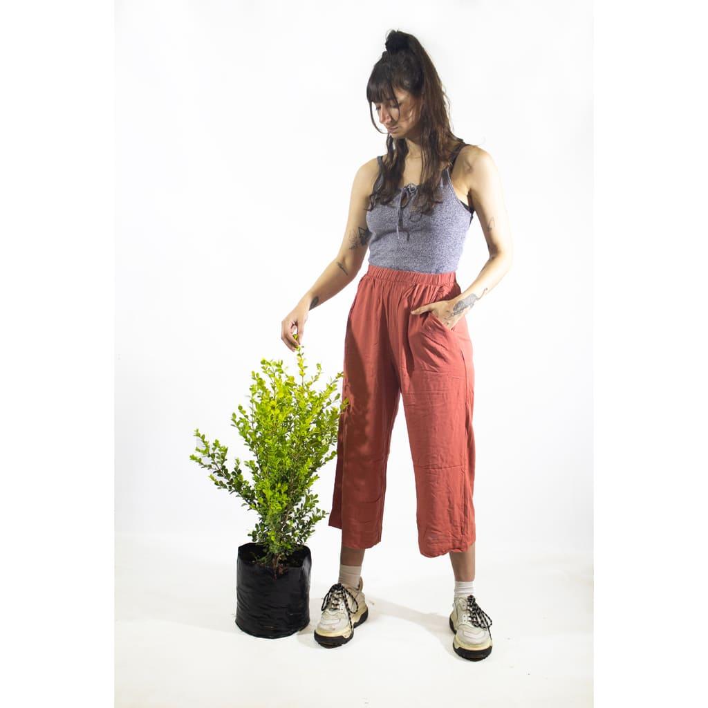 Plantas Faitful Plantas Exterior Buxus E10 Dimension 1 1 1 - Plantas Faitful