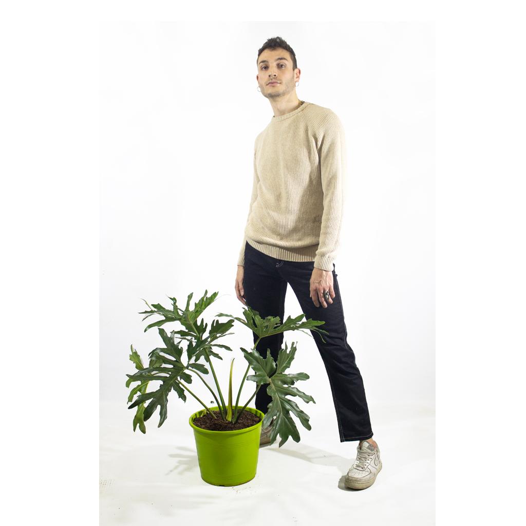 Plantas Faitful Plantas Interior Philodendron Misionero M25 Dimension 2 1 - Plantas Faitful