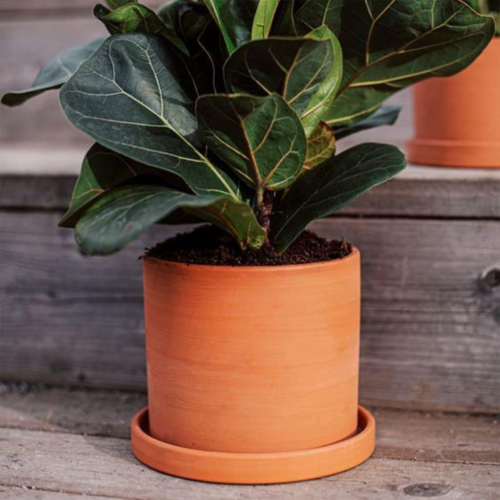 Plantas Faitful Macetas Barro Terracota Cilindro - Plantas Faitful
