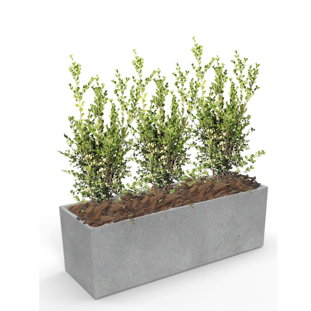 Plantas Faitful Combos Jardinera 803030 fc SBuxus E10 1 - Plantas Faitful