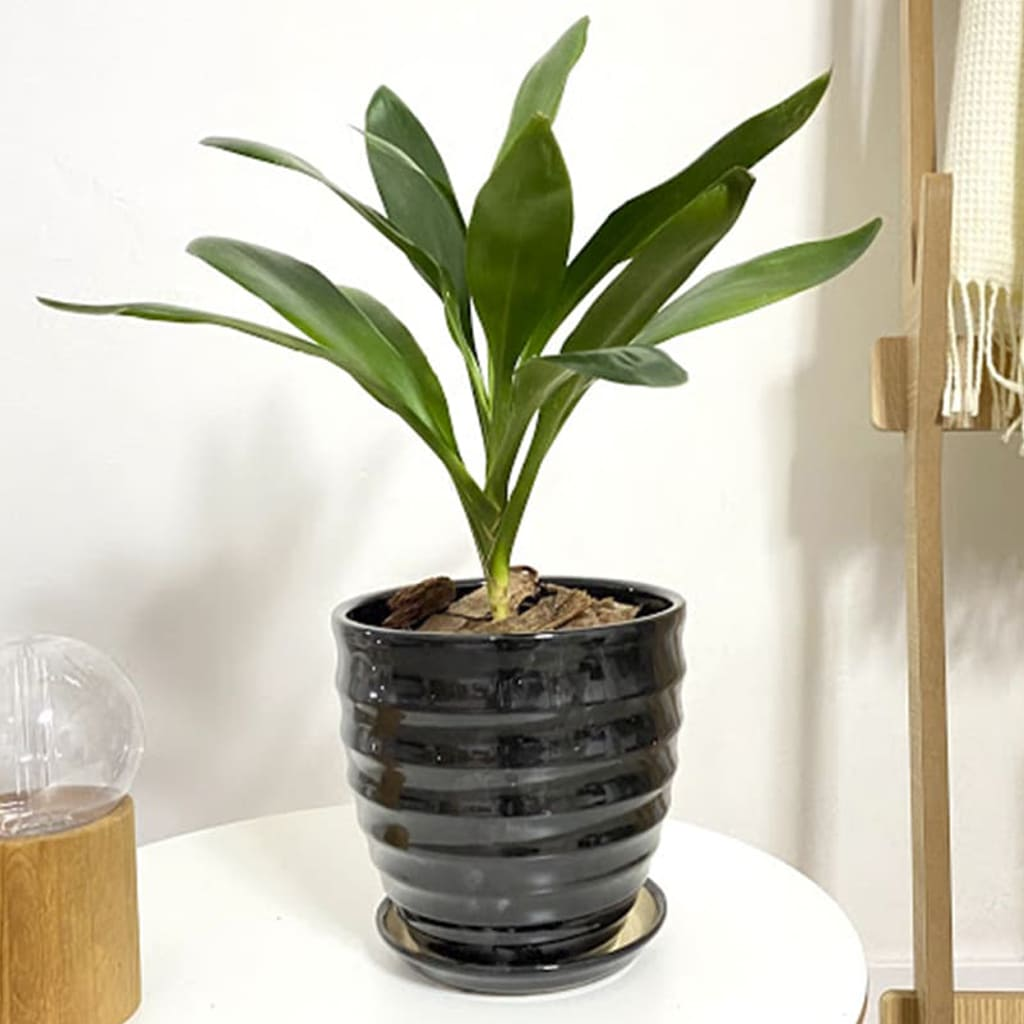 Plantas Faitful Maceta Ceramica 4 1 - Plantas Faitful