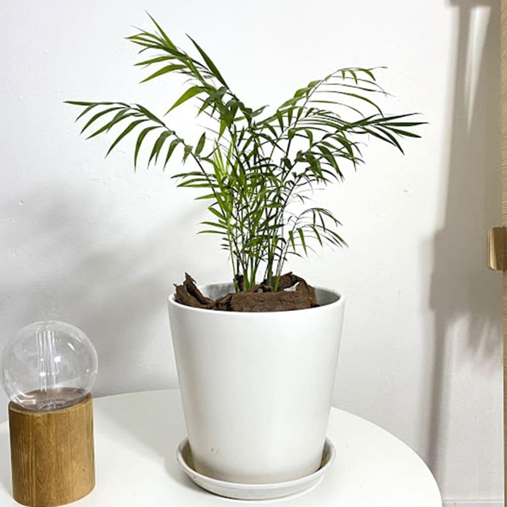 Plantas Faitful Maceta Ceramica 6 1 - Plantas Faitful