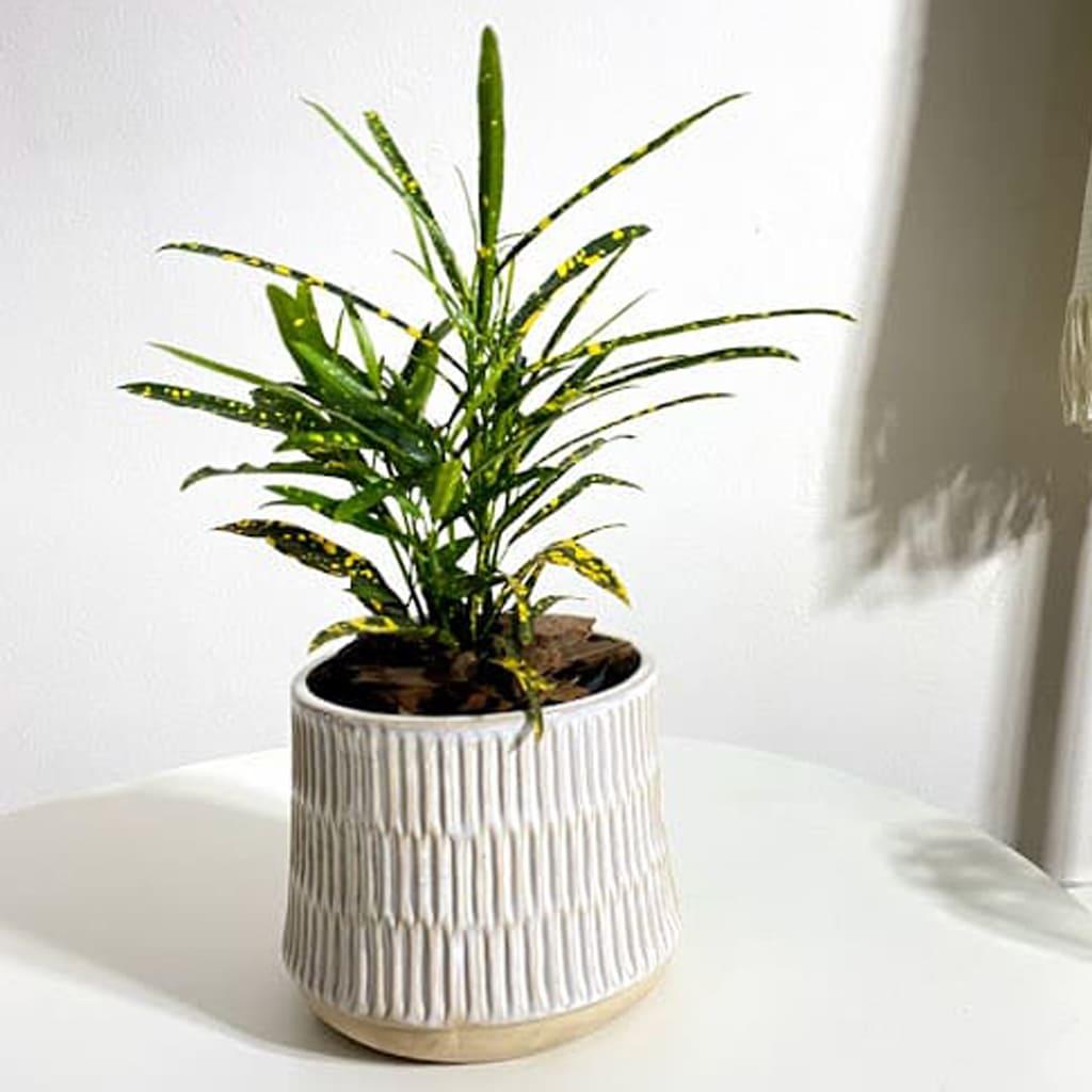Plantas Faitful Maceta Ceramica 9 1 - Plantas Faitful
