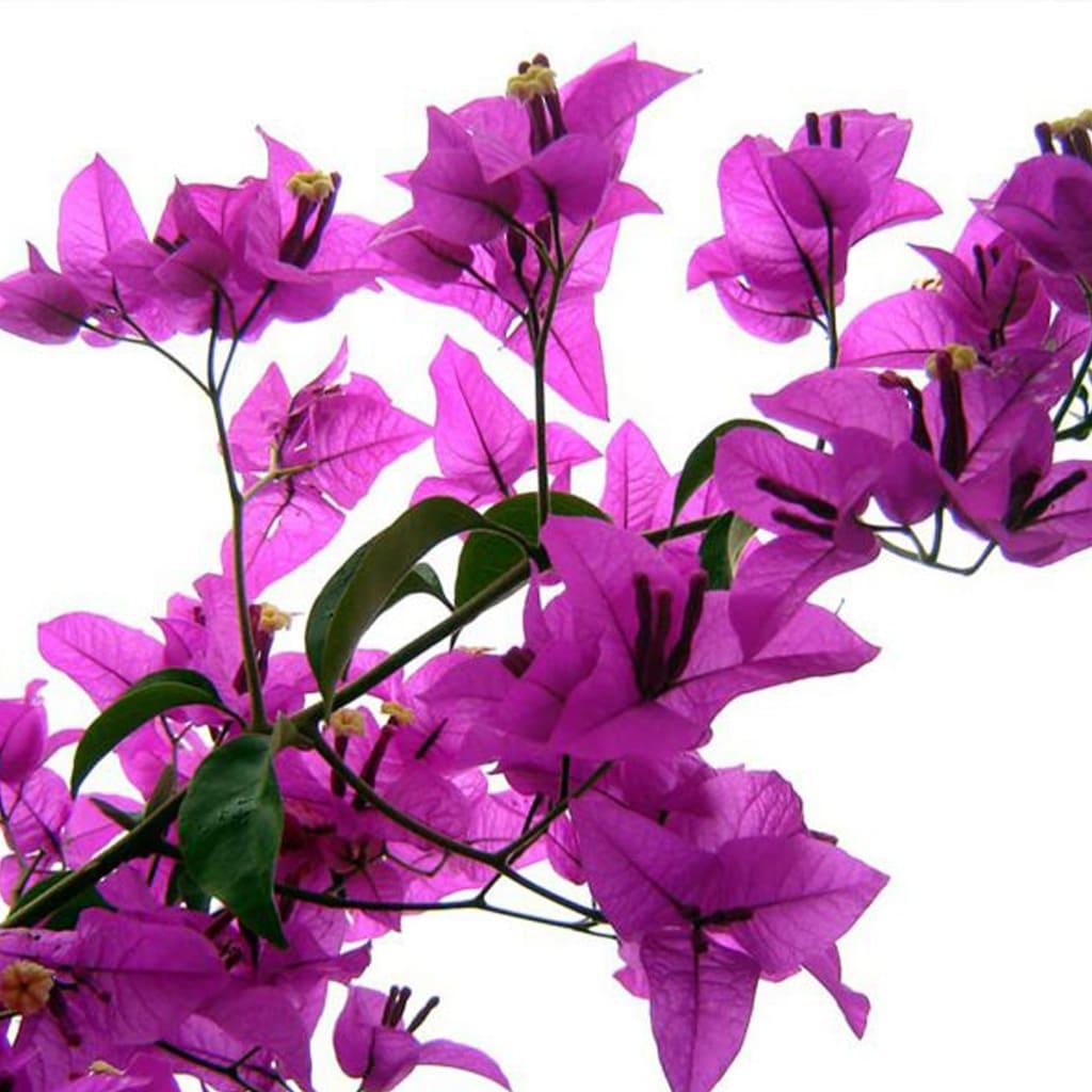 Plantas Faitful Plantas Exterior Santa Rita 2 1 - Plantas Faitful
