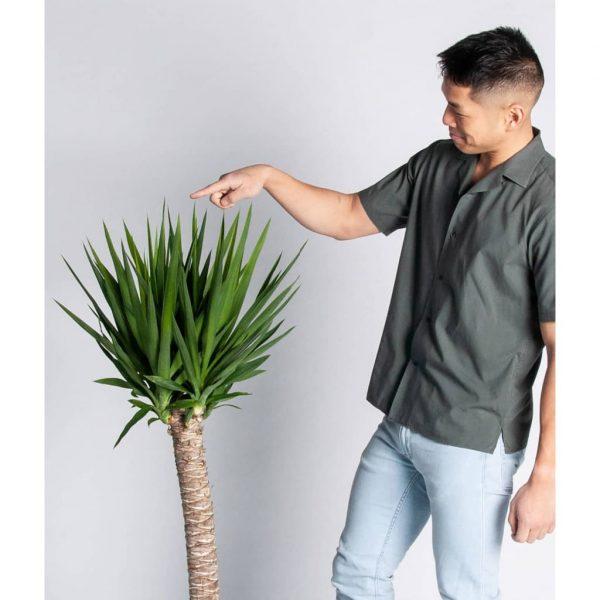 Plantas Faitful Plantas Interior Yucca E10 1tronco 1 - Plantas Faitful
